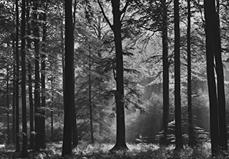 Avalon Black White Forest Photo Wallpaper Wall Mural Amazoncouk