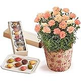 日比谷花壇 母の日 アンリ・シャルパンティエ「プティ・ガトー・アソルティ」とカーネーション鉢のセット 2019年 母の日カード付