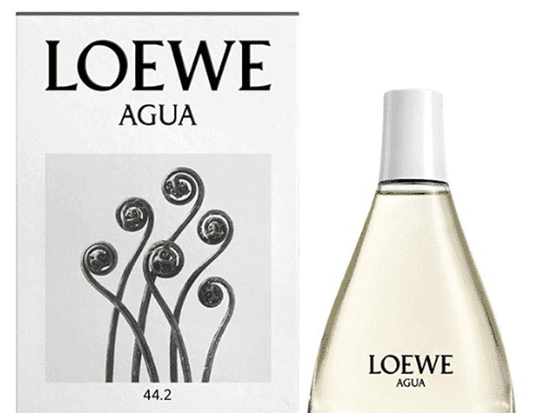 Loewe Agua 44.2 Edt Vapo 100 ml - 1 unidad: Amazon.es