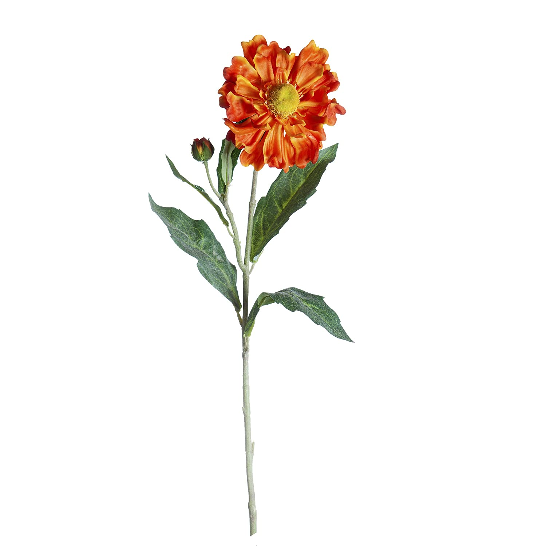 Darice KBI-13969 Everyday Long stem Coronarium 26 Yellow
