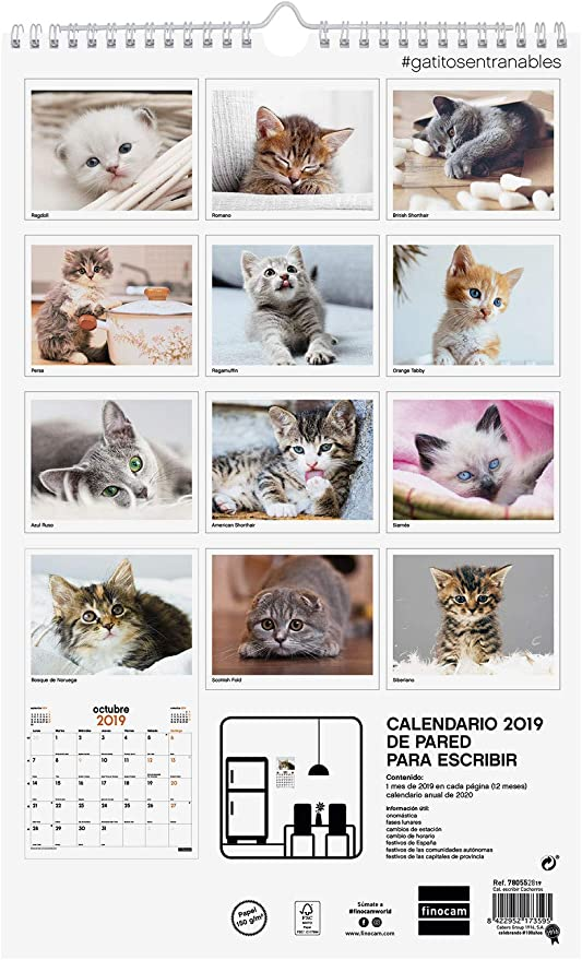 Finocam 780562919 - Calendario de pared 2019: Amazon.es: Oficina y papelería