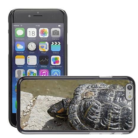 iphone 7 hülle wasserschildkröte