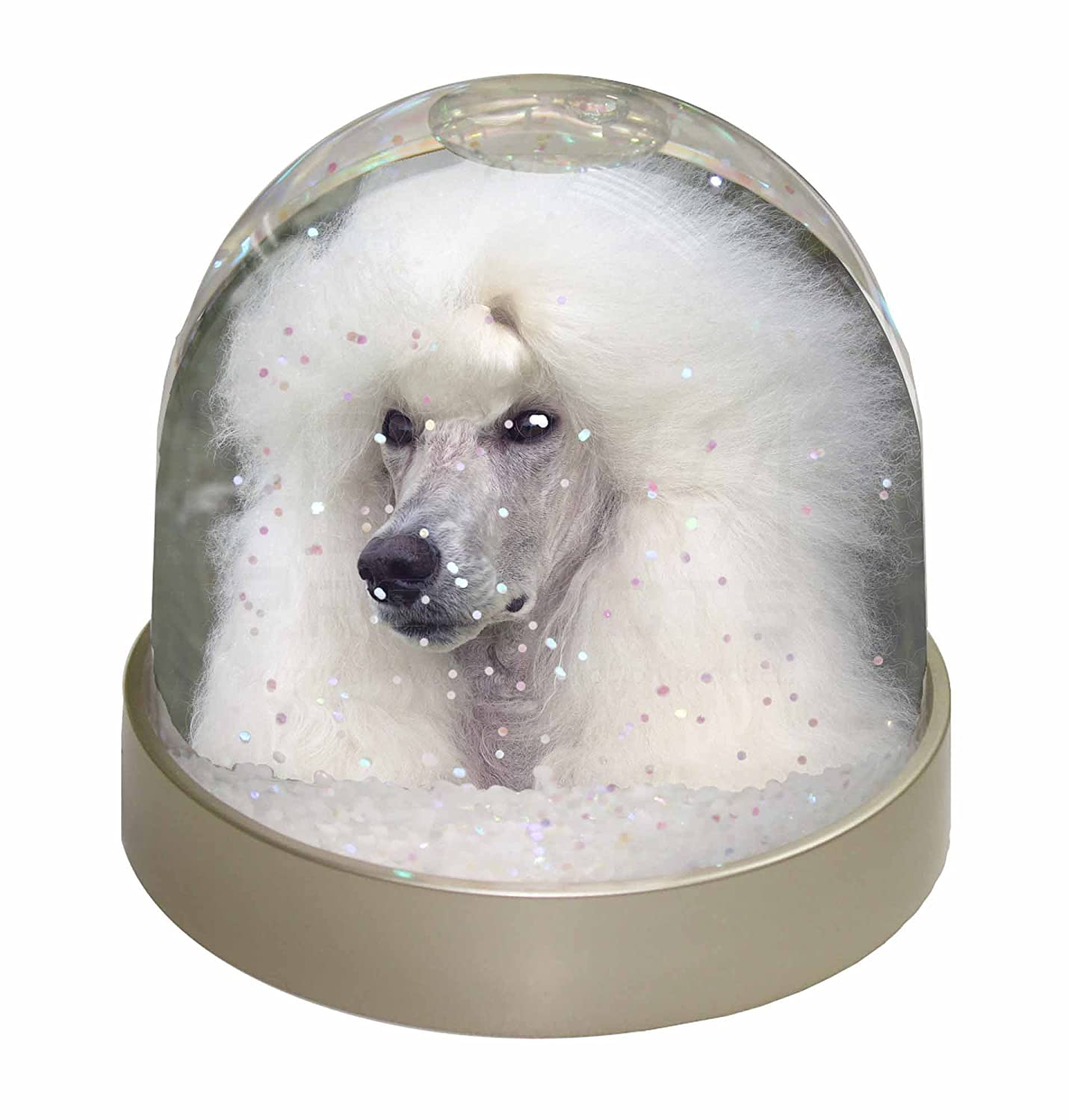 Advanta White Poodle Dog Snow Dome Globe Waterball Gift, Multi-Colour, 9.2 x 9.2 x 8 cm Advanta Products AD-POD5GL