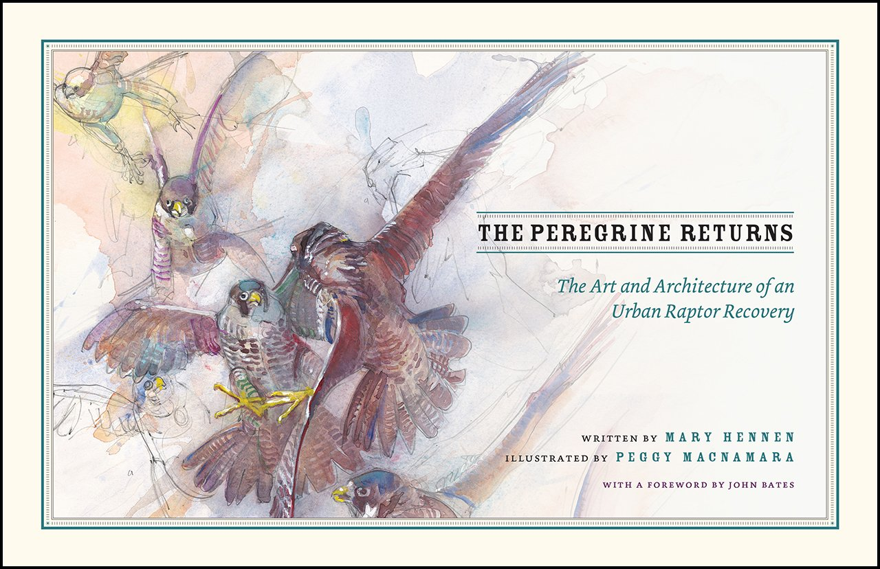 Read Online The Peregrine Returns: The Art and Architecture of an Urban Raptor Recovery PDF