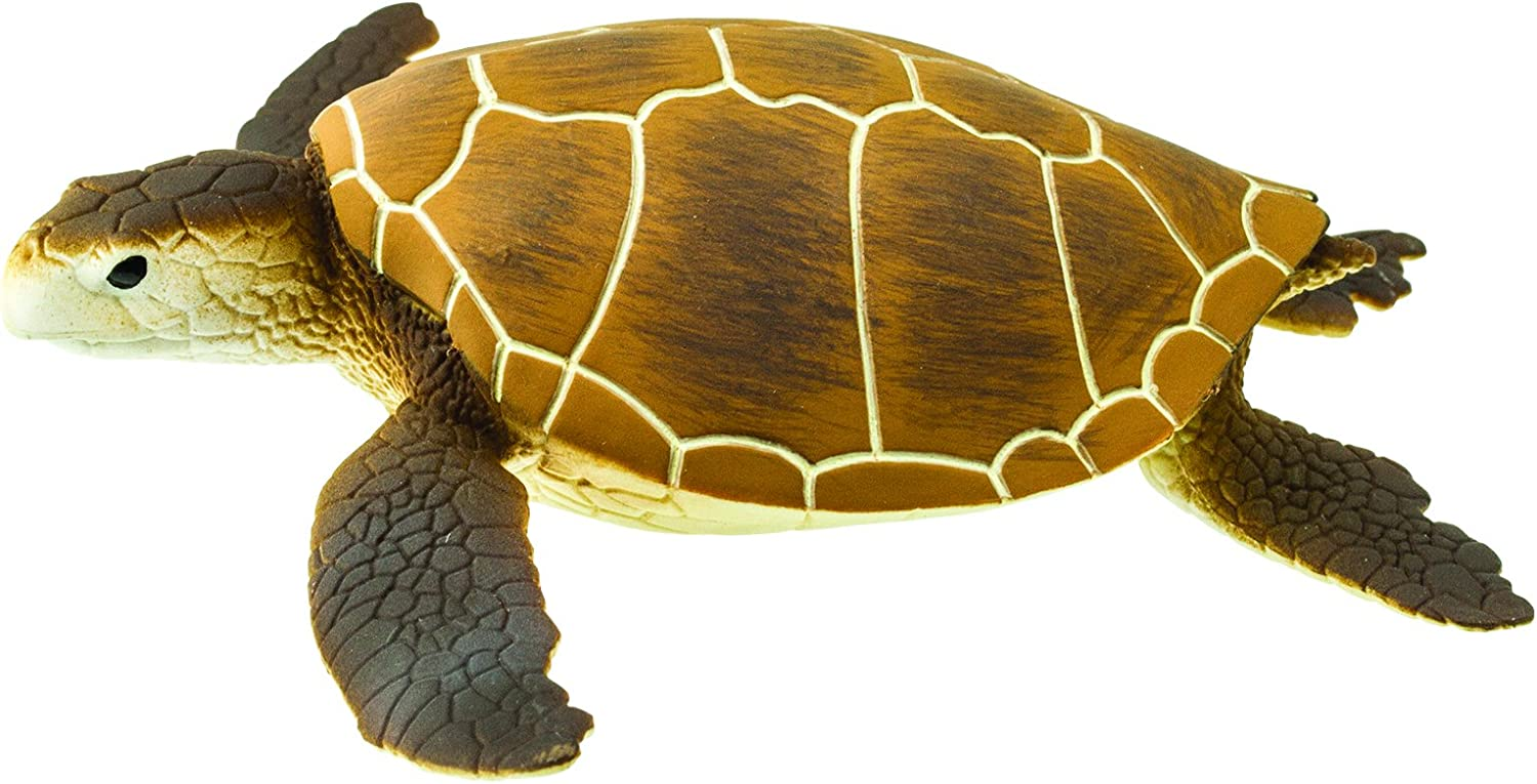 Safari Ltd. Green Sea Turtle Realistic Hand Painted Toy Figurine Model  Quality Construction from Phthalate, Lead and BPA Free Materials for Ages 18  and ...
