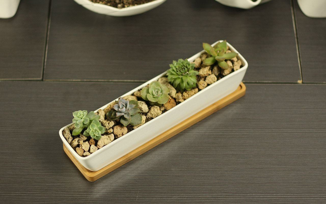 11.1 inch long rectangle White Ceramic Succulent Planter Pots / Mini Flower Plant Containers with Bamboo Saucers. Product size:11.1x2.36x1.77inch. (long rectangle) by wish you have a nice day