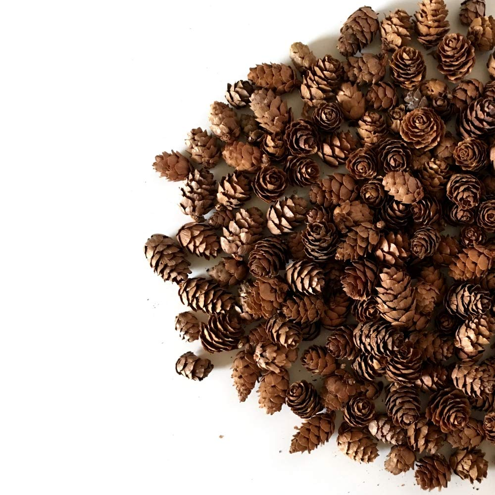Banberry Designs Mini Brown Pinecones - Approx. 200 Small Assorted Sized Pine Cones - Fall and Christmas Crafts 3484