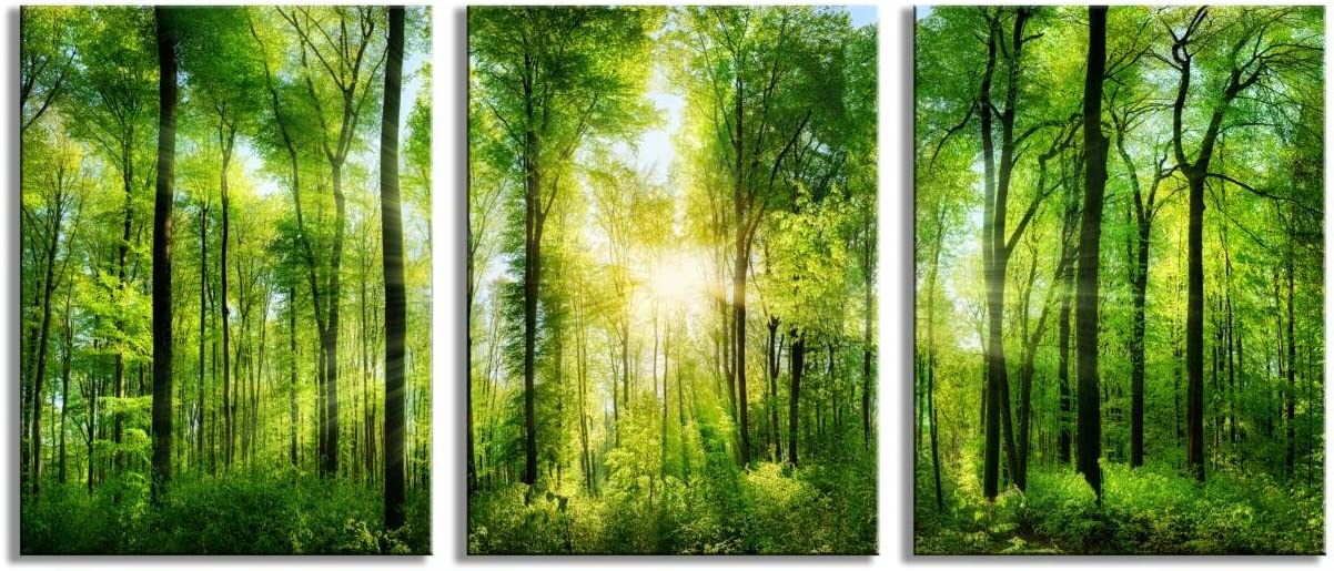 Youk-art Decor 3 Panels Morning Sunrise Green Trees Landscape Sunshine Over Forest Photograph Printed on Canvas for Home Wall Decoration (Green, 12x16inchx3)