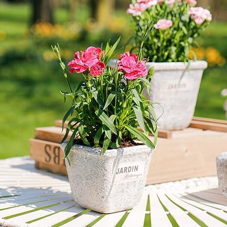 Dibor Lot de Deux Pots de Fleurs béton avec Motif Lapin Blanc ...
