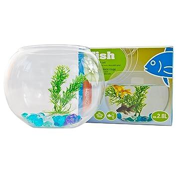 Niños Acuario Juego de 2,8 L de accesorios para Acuario Planta de pez pescado de platillos Cristal: Amazon.es: Productos para mascotas