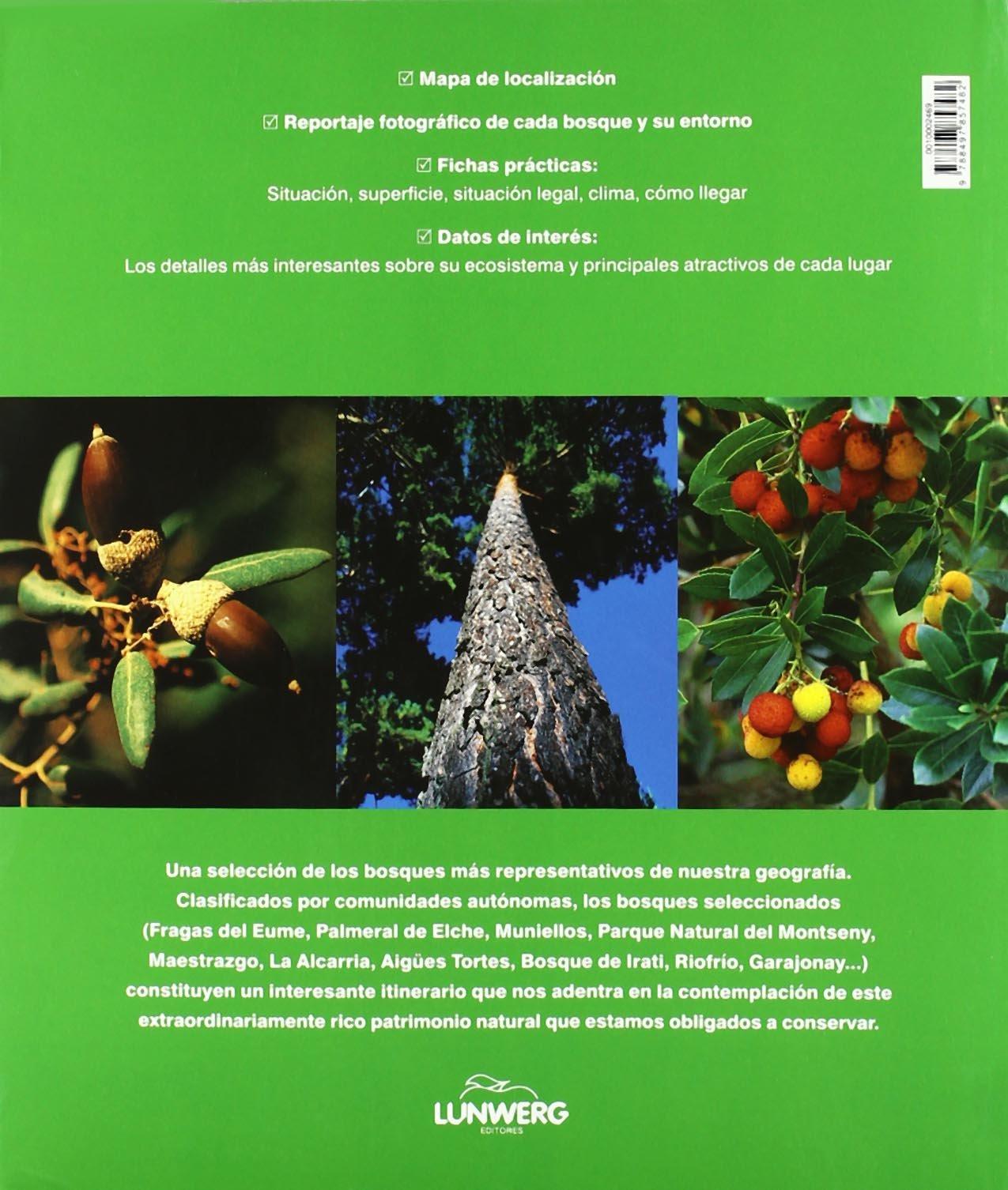 Bosques de España. Lunwerg Medium: Amazon.es: Araújo, Joaquín: Libros