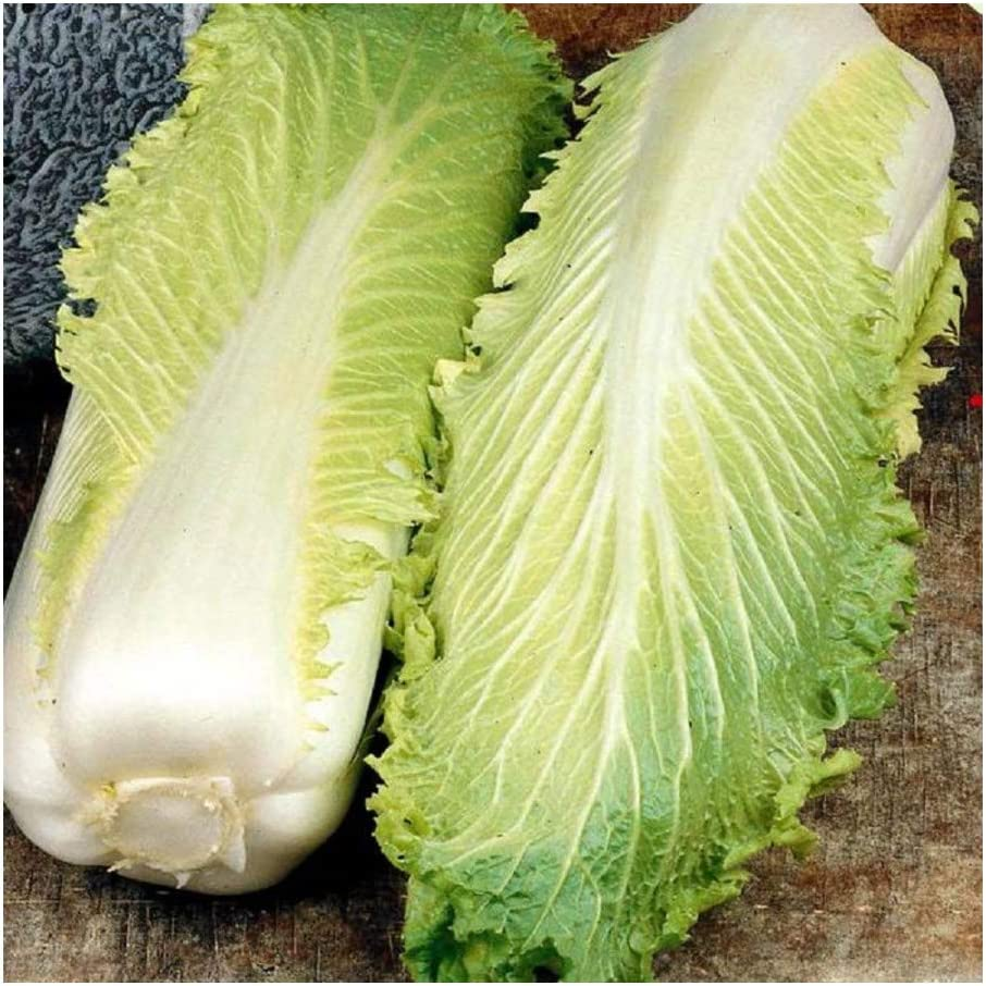 Premier Seeds Direct Chinese Cabbage Michihili 1000 Finest Seeds Amazon Co Uk Garden Outdoors