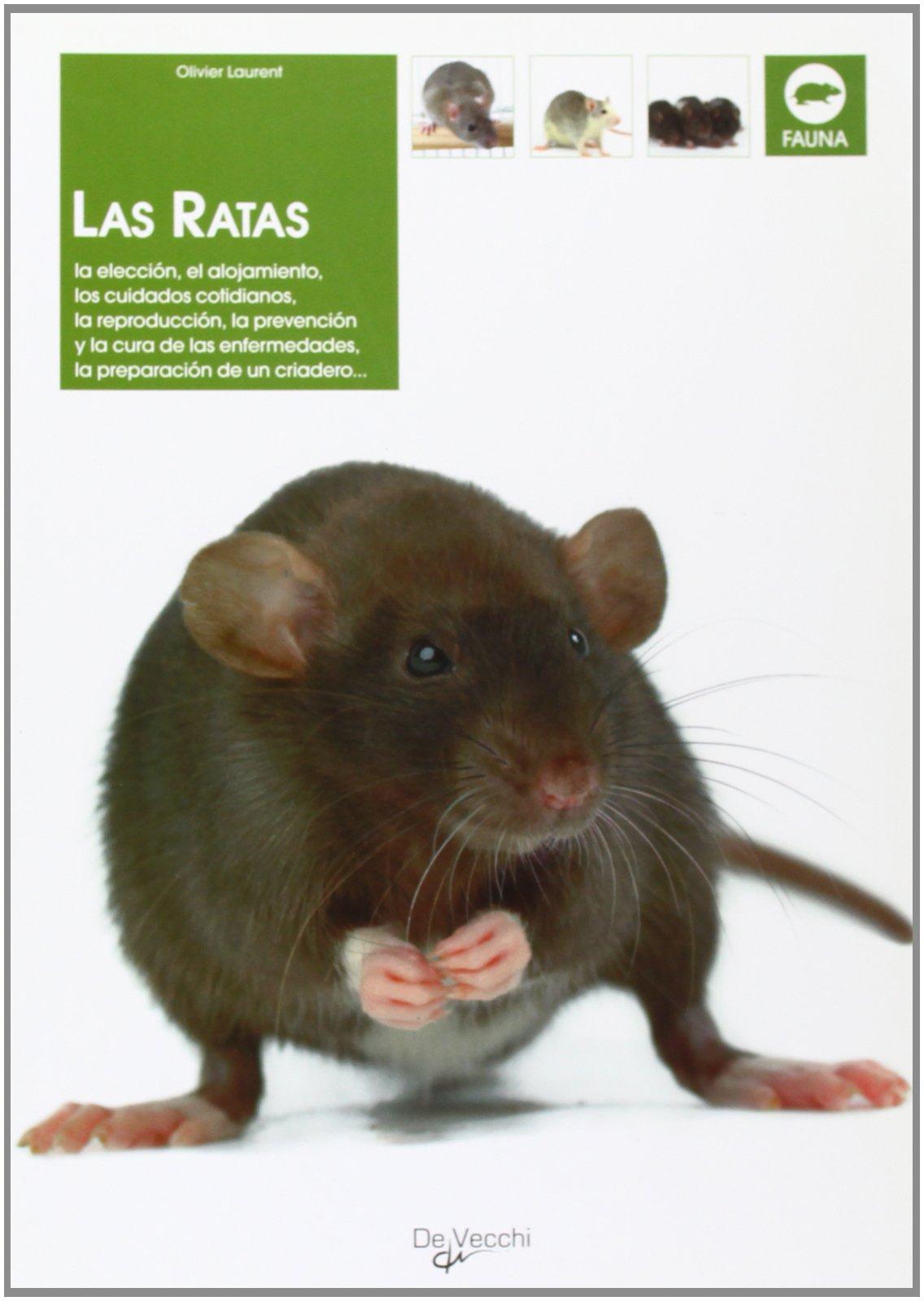 Las ratas (Animales): Amazon.es: Olivier Laurent: Libros