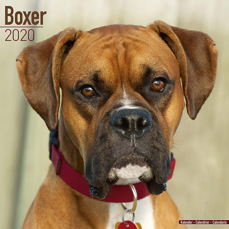 Athletic Calendario 2020.Boxer Calendar 2020 Amazon Co Uk Avonside Publishing Ltd