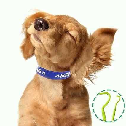 Para mascotas perros y gatos pulgas y garrapatas Collar con Esencia botánico natural para el Control ...