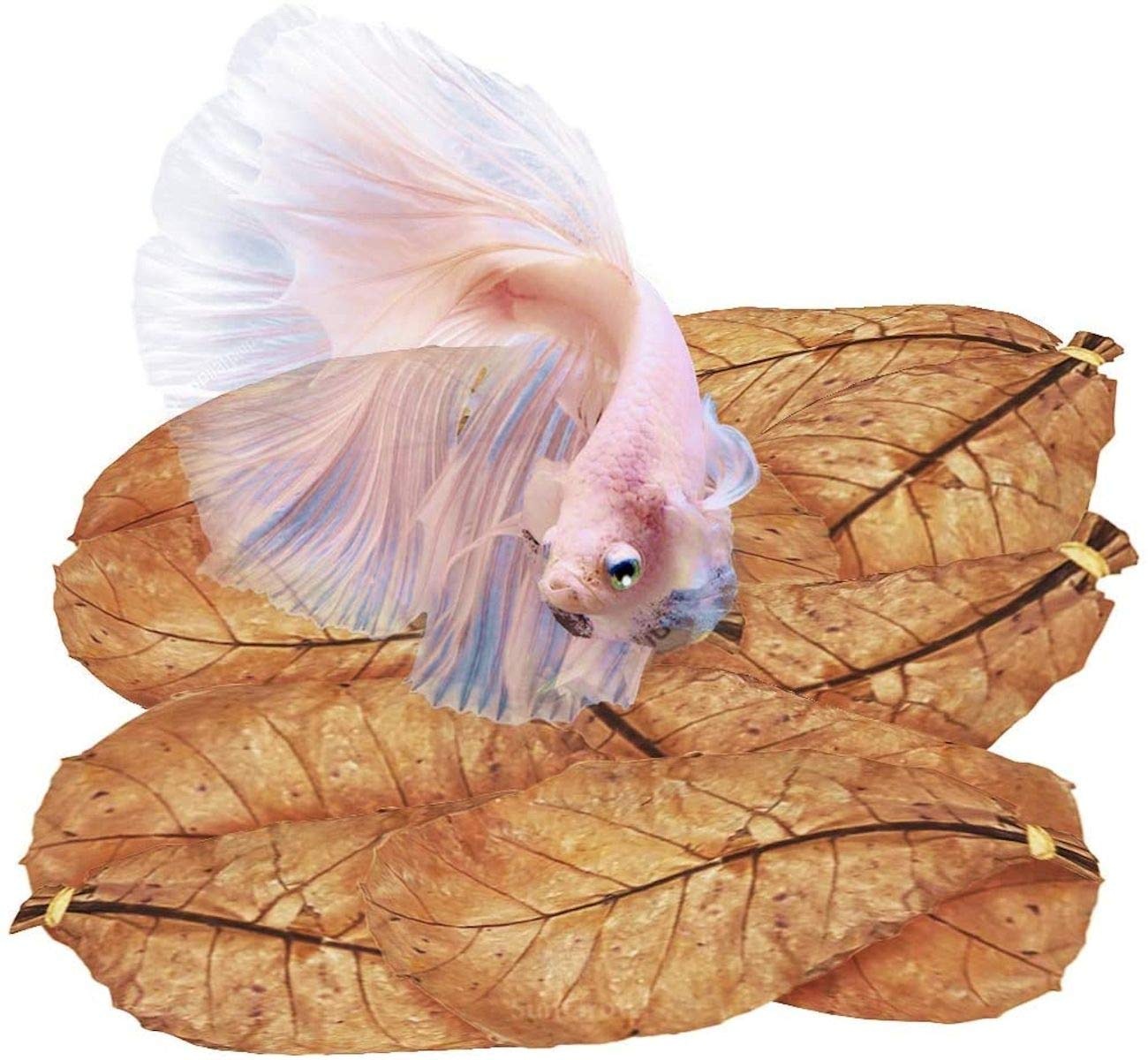 SunGrow Catappa Leaves, 7-Inches, Keep Betta and Other Aquarium Pets Healthy, Indian Almond Leaf Acts as Water Conditioner, Helps with Fish Fin Color Improvement, 10 Leaves per Pack