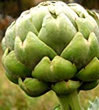 Artichoke Seeds- Green Globe- Heirloom- 20+ Seeds