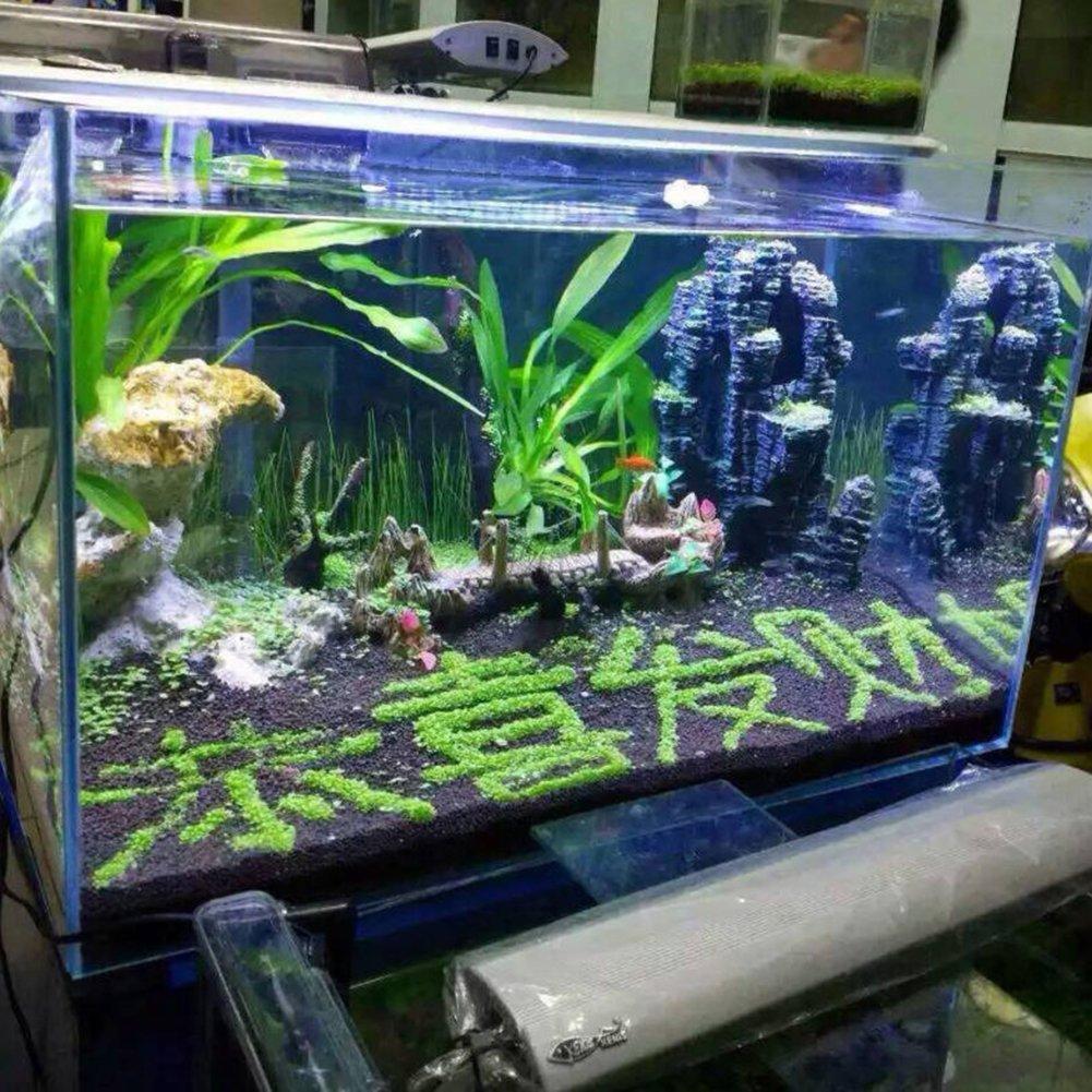 quanjucheer planta de acuario semillas pecera acuática césped agua bajo el agua Decoración Planta: Amazon.es: Productos para mascotas