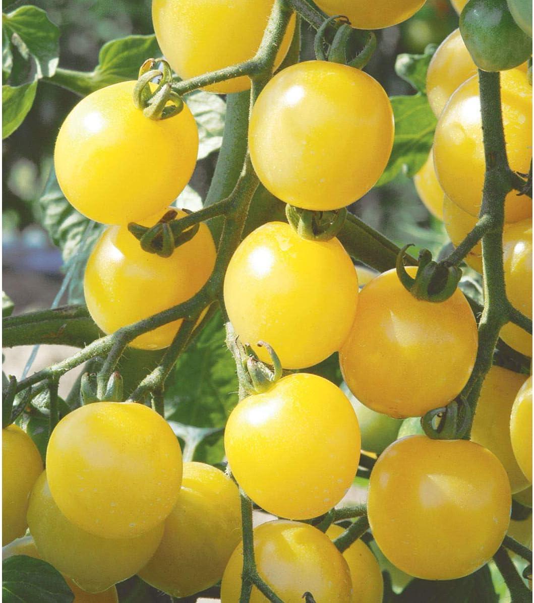 David's Garden Seeds Tomato Cherry White SL2979 (Yellow) 50 Non-GMO, Open Pollinated Seeds