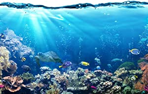Tropical Fish Ocean Reef Turtle Nature Photo Cool Wall Decor Art Print Poster 36x24