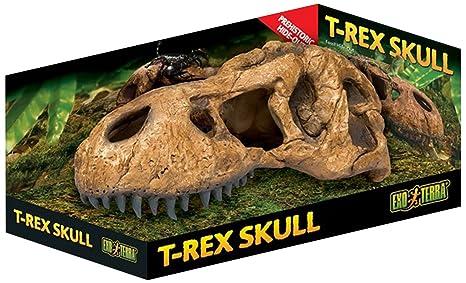 Amazon Com Exo Terra T Rex Skull Terrarium Decor Pet Supplies