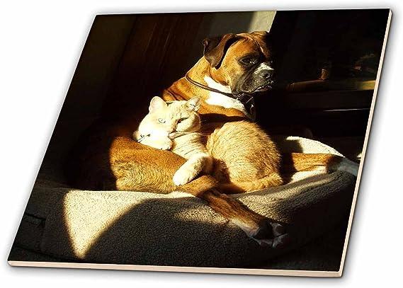 3dRose ct/_50194/_2 Dog N Cat Peacefully Together Ceramic Tile 6-Inch
