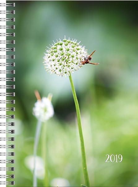 rido/idé 702180702 Buchkalender Timing 1, 2 Seiten = 1 Woche, 148 x 210 mm, Grafik-Einband Pusteblume, Kalendarium  2019