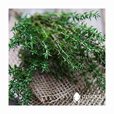 Caribou Seed Company: Thyme - 100+ Seeds - All Purpose Herb Seasoning - Fresh Organic Seed : Garden & Outdoor