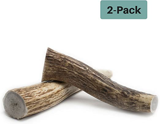 Chipper Critters All Natural Medium Whole Elk Antler Dog Chew - Made in The USA The Best, Virtually Indestructible Treat for Dogs and Puppies - for Dental and Bone Health