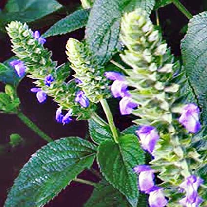 Amazon.com: Portal Cool Chia - Sal de semillas para plantas ...