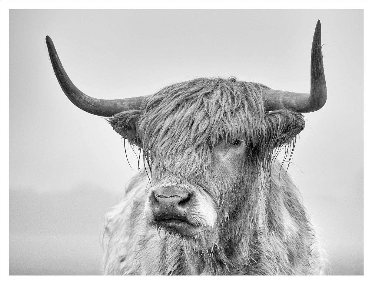 Black and White Highland Cow Print Wall Art Décor for Office Living Room, Hairy Animal Cow Wall Décor Art Canvas Print Poster Pictures Paintings Wall Murals Without Frame