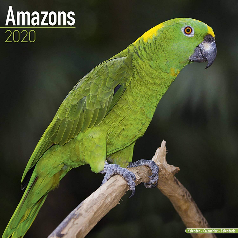 Amazon Parrot Calendar Parrot Calendar Bird Calendars