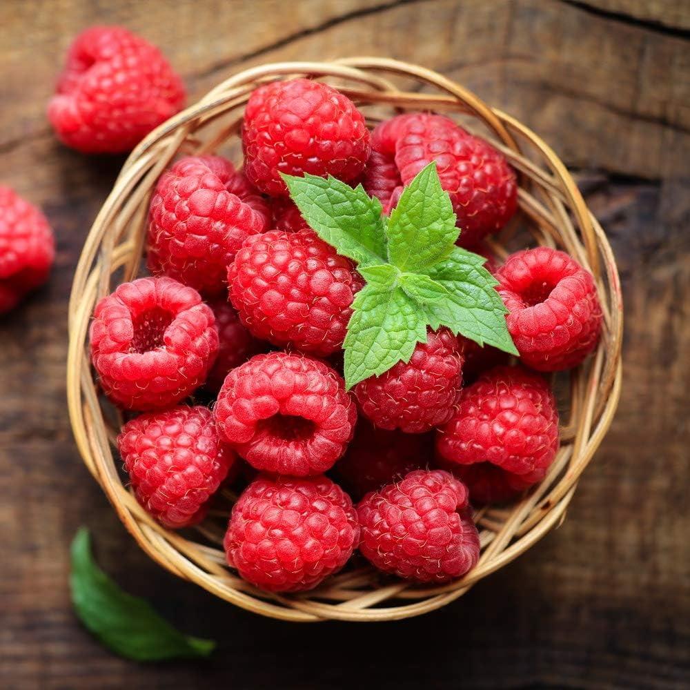 Prozis Big Shot, Sabor Fiery Raspberry - 12 Unidades de 60 ml
