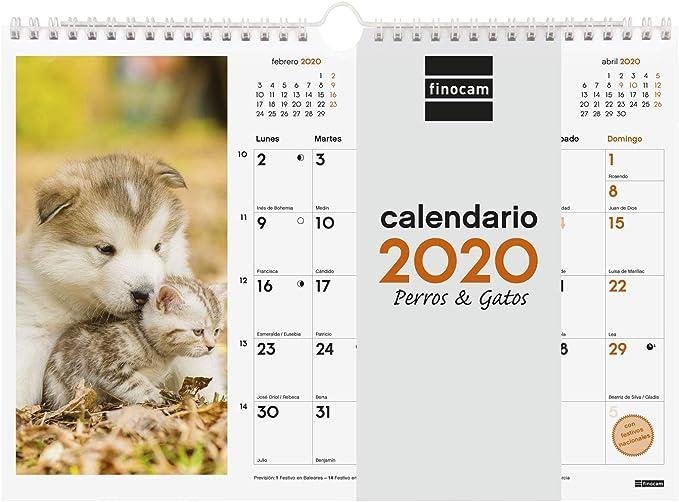 Finocam - Calendario de pared 2020 Imágenes Espiral 30x21 Perros y Gatos español: Amazon.es: Oficina y papelería