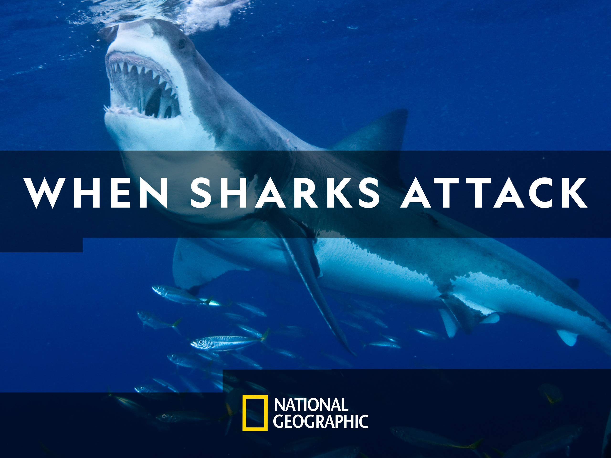 Amazon com: When Sharks Attack Season 5: Amazon Digital
