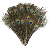 DECORA 100 Pieces Real Natural Peacock Feathers for Craft Halloween Costume Bridesmaid Corsage Christmas Wreath and Home…