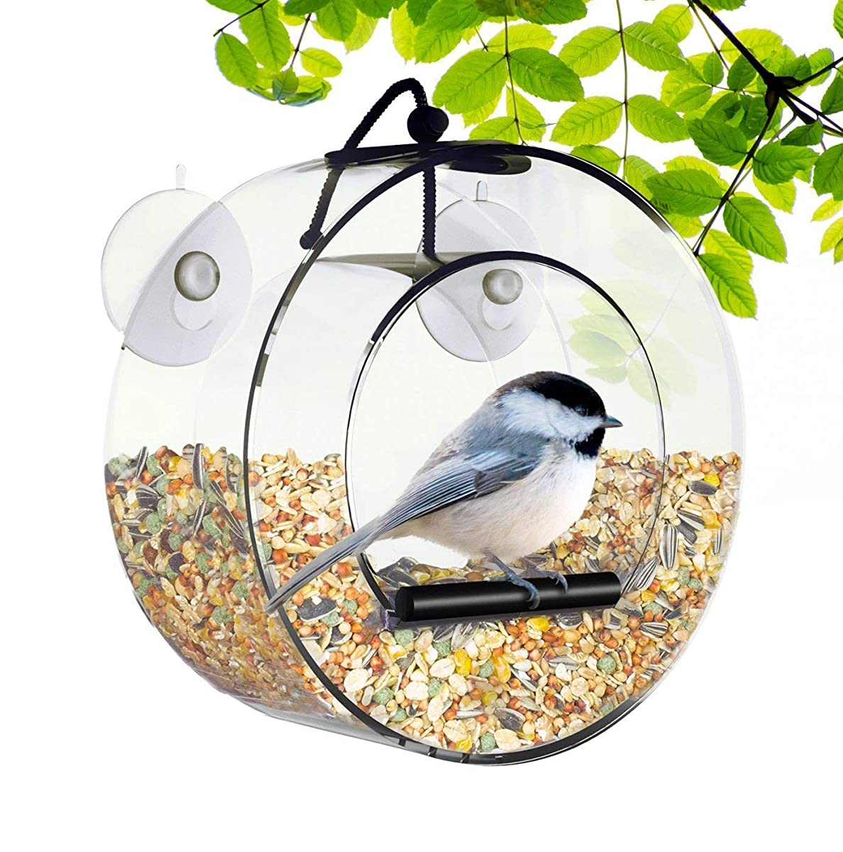 BirdMaster Window Bird Feeder - Acrylic Circular Design - Strong Suction Cups - Drain Holes - Squirrel Proof - Easy to Install & Clean – Outdoor for All Small Wild Birds [Gift-Ready Packaging]
