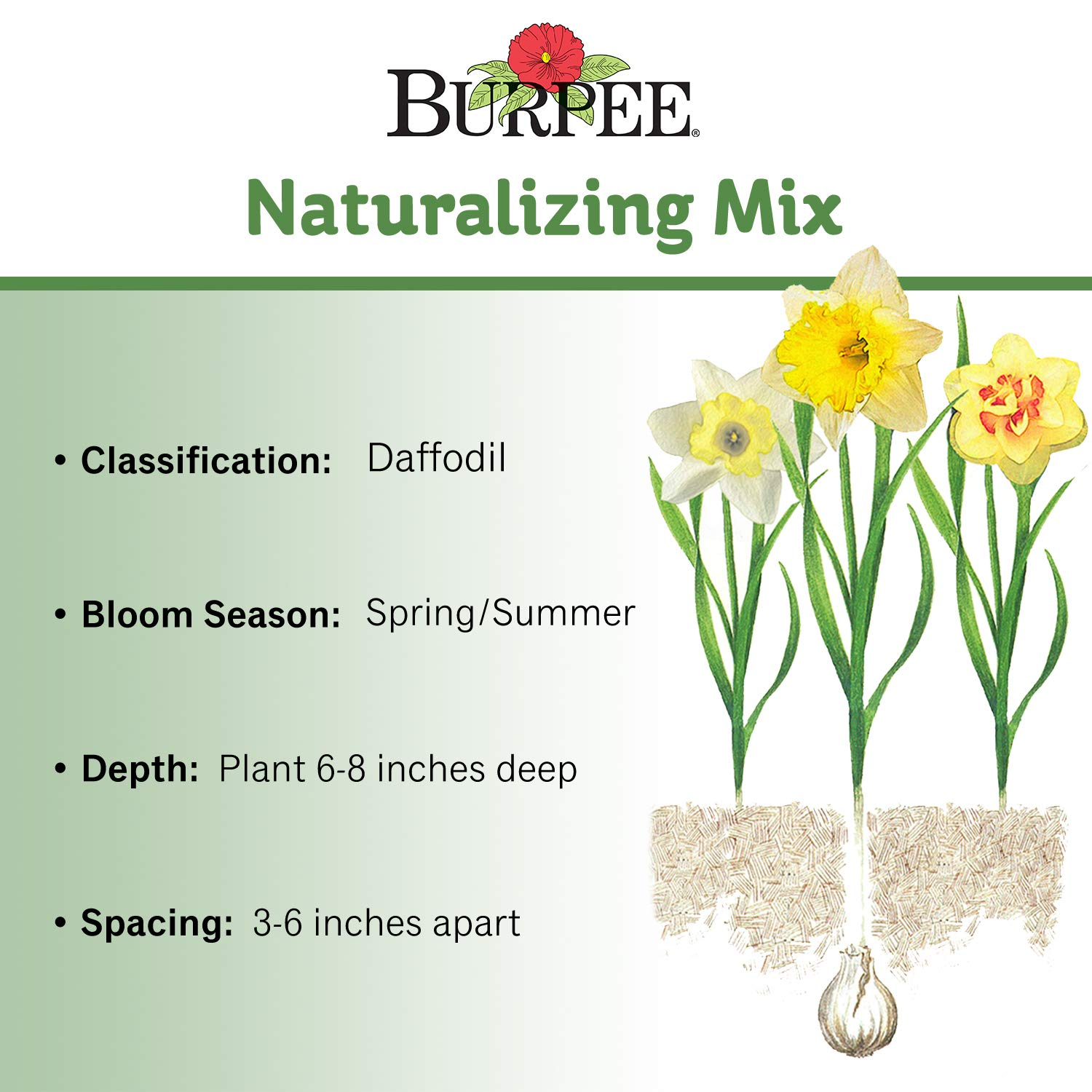 Burpee's Naturalizing Mix Daffodil - 150 Flower Bulbs | Multiple Colors by Burpee (Image #2)