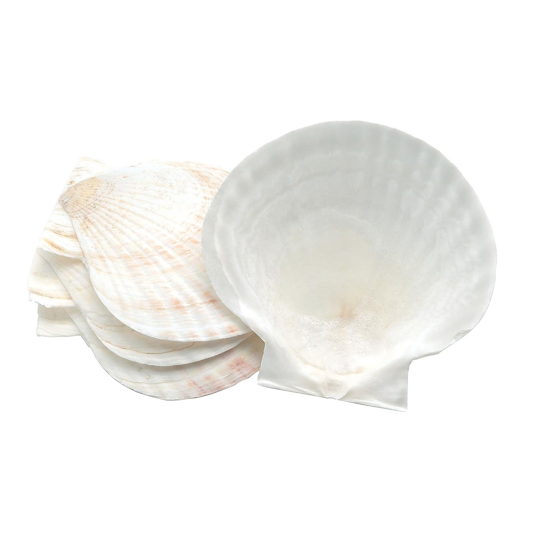 Nantucket Seafood 4770 Natural Baking Sea Shells, 5-Inch, Set of 4 Fox Run