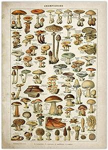 Vintage Poster Antique Floral Canvas Print Art Botanical Educational Poster Mushroom Wall Art Home Decor Silk Spun Cloth Painting