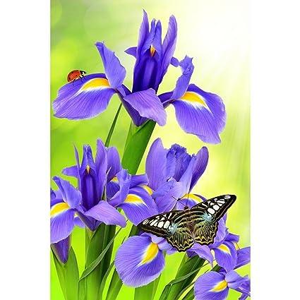Pitaara Box Purple Iris Flower with Butterfly Morpho On Green ...