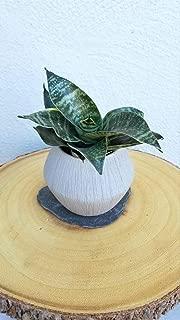 product image for 1 Sansevieria Trifasciata Hahnii Live Plant
