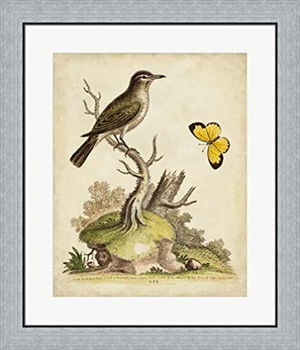 Amazon.com: Companions in Nature I by George Edwards Framed Art ...