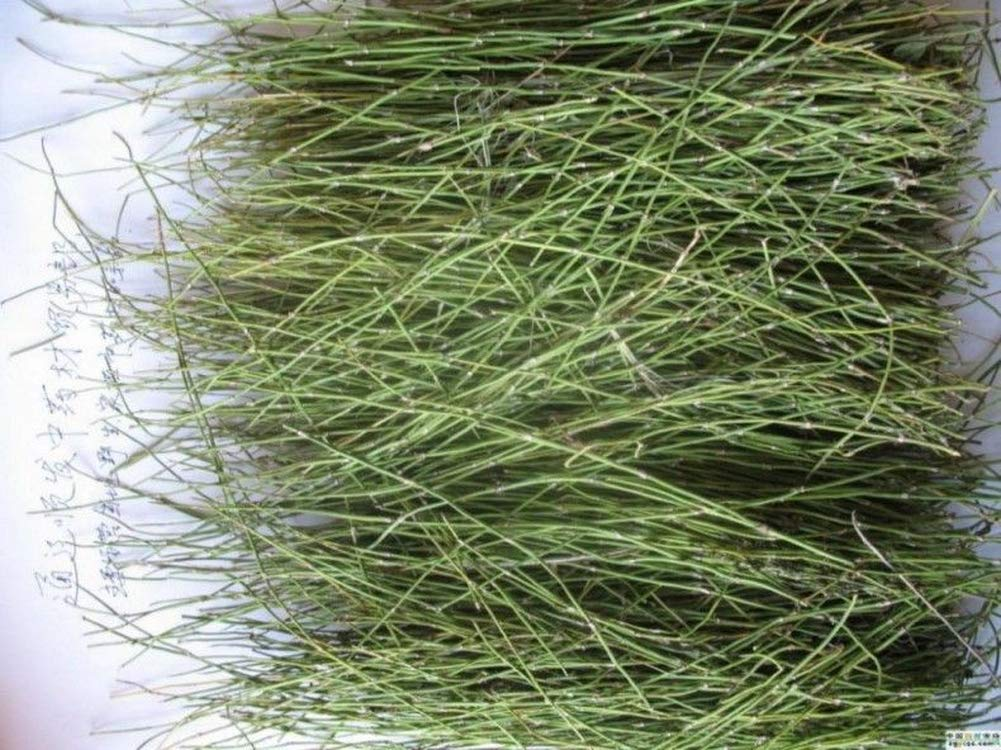 250g (0 55LB) Pure Raw Natural Ephedra Sinica Tea Ma Huang Herbal Tea  Health Care Aging