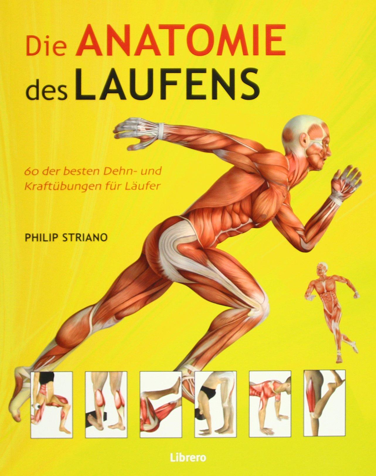 Die Anatomie des Laufens: Das Warming-up, Stretching und Cool-down ...