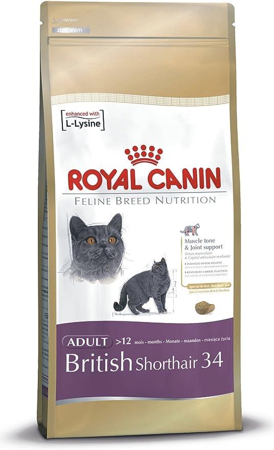 Royal Canin Comida para gatos British Shorthair 10 Kg: Amazon.es ...