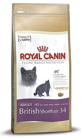 Royal Canin Comida para gatos British Shorthair 10 Kg
