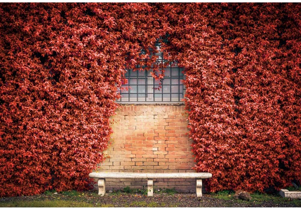 6x4ft Red Ivy Wall Vinyl Photography Background Ivy Covered Window Wall Wedding Backdrop Party Decoration Banner Photo Studio Prop