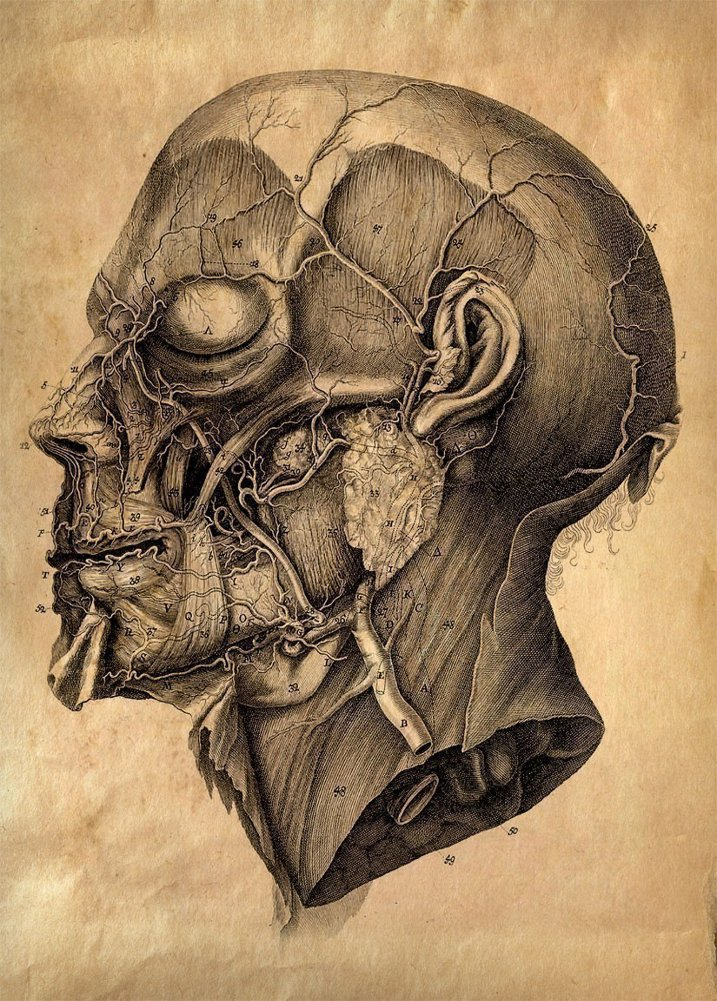 Vintage Anatomy HUMAN BRAIN c1776 by Albrecht von Haller 250gsm ...
