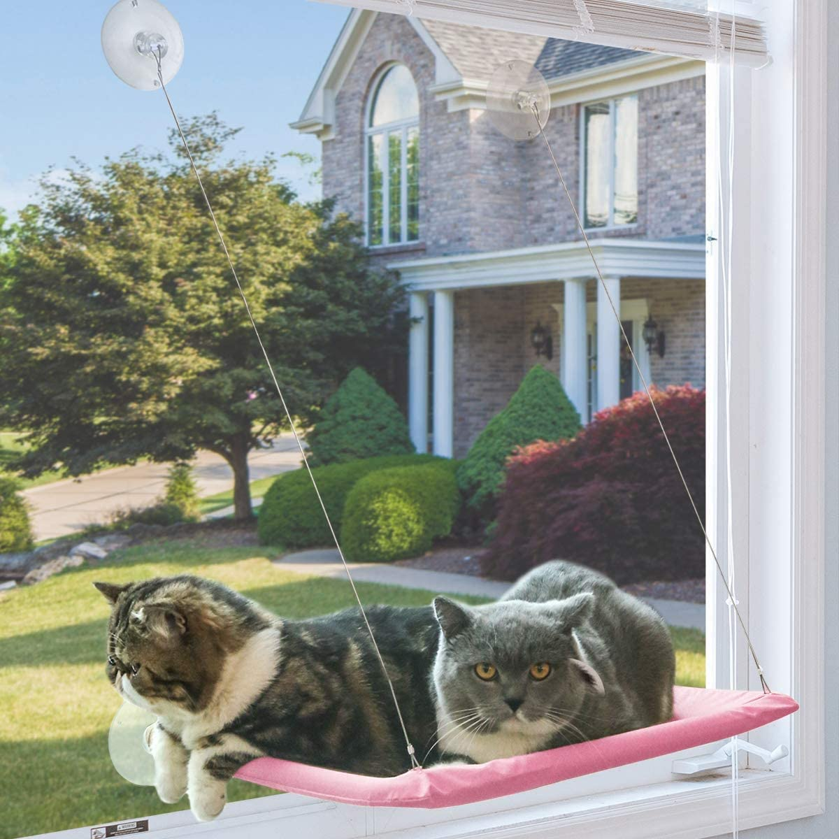 NOYAL Cat Resting Seat Perch Window Hammock Cats Kitty Safety Bed with Durable Heavy Duty Suction Cups Cat Bed Holds Up to 30lbs(Extra 2 Suction Cups) : Pet Supplies